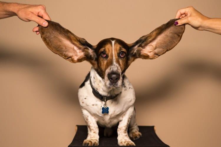 Escucha social o social listening