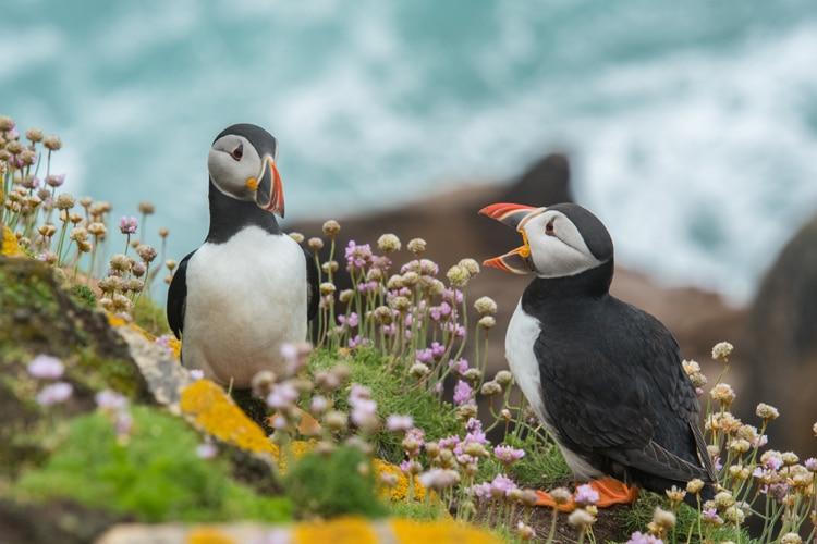 Consultor de marketing online - pingüinos